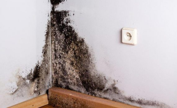 Mould Consulting, Mould Services, Mould Growth